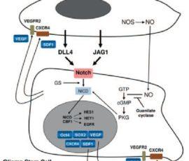 Ultimi studi scientifici sul microenvironment nei gliomi